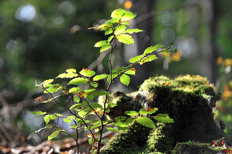 Heilsame Kraft der Natur